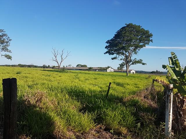 Fazenda no centro do estado de São Paulo com varias granjas para frango.